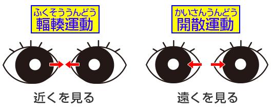 眼球を外側に動かす働き