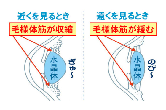 屈折力を自動的・連続的に変化